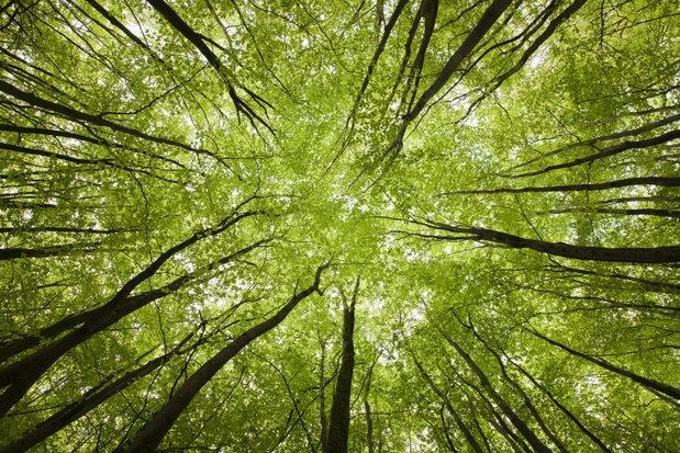 'Bomen zijn onze natuurlijke airco's en moeten beschermd worden'